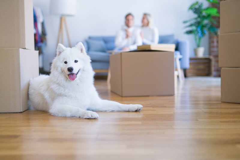 Dog and Move with Boxes