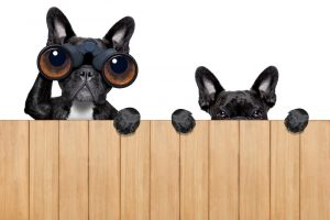 Neighbors Fence Dogs